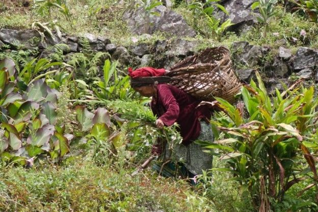 Une femme locale du coté du sikkim photo blog voyage tour du monde https://yoytourdumonde.fr
