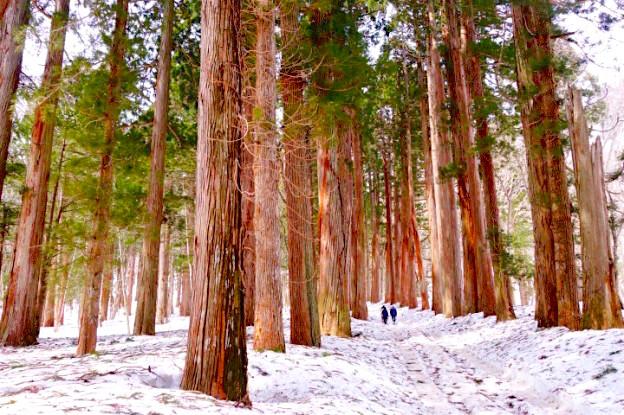 Immense forêt dans les Alpes Japonaises photo blog voyage tour du monde https://yoytourdumonde.fr