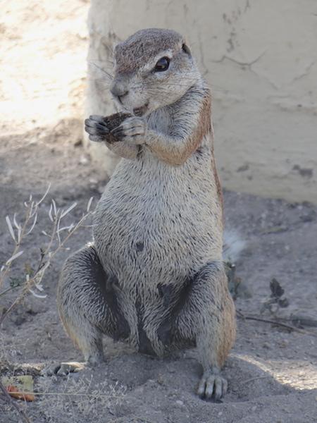 Alors quel est cet animal à Etosha en Namibie photo blog voyage tour du monde travel https://yoytourdumonde.fr