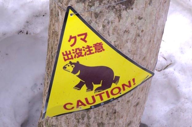Vous pouvez rencontrer des ours dans les Alpes Japonaises photo blog voyage tour du monde https://yoytourdumonde.fr