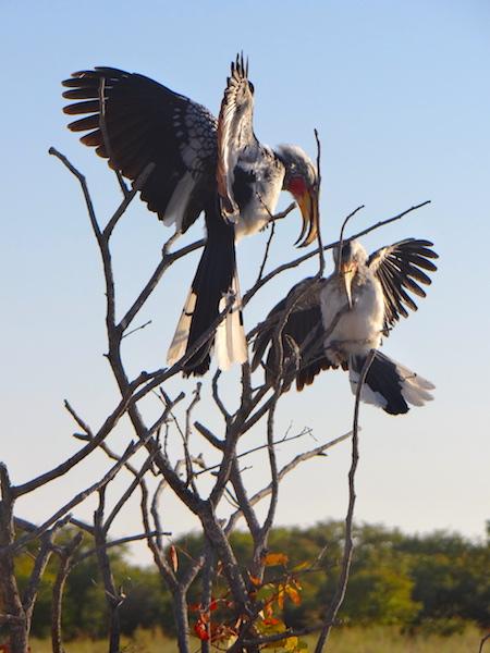 Oiseaux Etosha Namibie photo blog voyage tour du monde travel https://yoytourdumonde.fr
