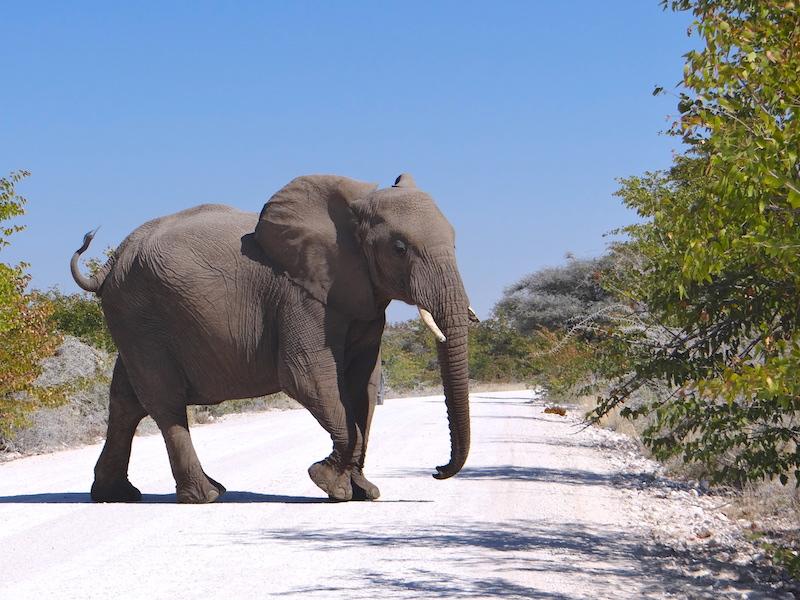Elephant Etosha Namibie photo blog voyage tour du monde travel Afrique https://yoytourdumonde.fr
