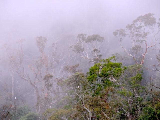 Trek et randonnée du coté des Blue Mountains en Australie photo blog voyage tour du monde http://yoytourdumonde.fr