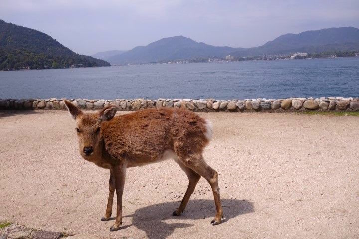 Miyajima Sambashimae Parc photo blog voyage tour du monde https://yoytourdumonde.fr