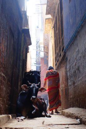 Ancienne partie de la ville de Varanasi qui est un vrai labyrinthe entre vache et humain photo blog tour du monde https://yoytourdumonde.fr