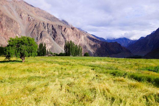 Turtuk est un petit village indien qui se trouve à quelques kilomètres du pakistan dans le ladakh photo blog voyage tour du monde https://yoytourdumonde.fr