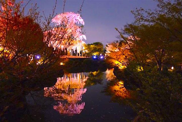 La beauté des parcs et jardins de Kyoto en mars-avril vous amenera dans de superbes moments avec dame nature! photo blog tour du monde https://yoytourdumonde.fr