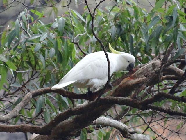 Oiseaux dans le parc national des blue mountains photo blog voyage tour du monde https://yoytourdumonde.fr