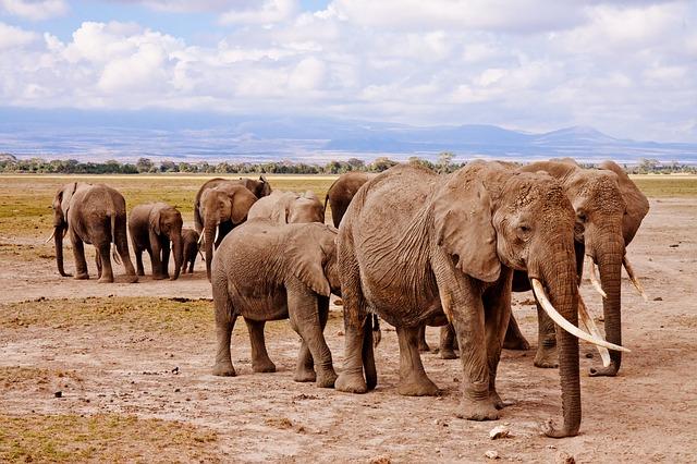 L'Afrique est un continent magnifique avec de nombreux parcs à visiter. Photo blog voyage tour du monde http://yoytourdumonde.fr