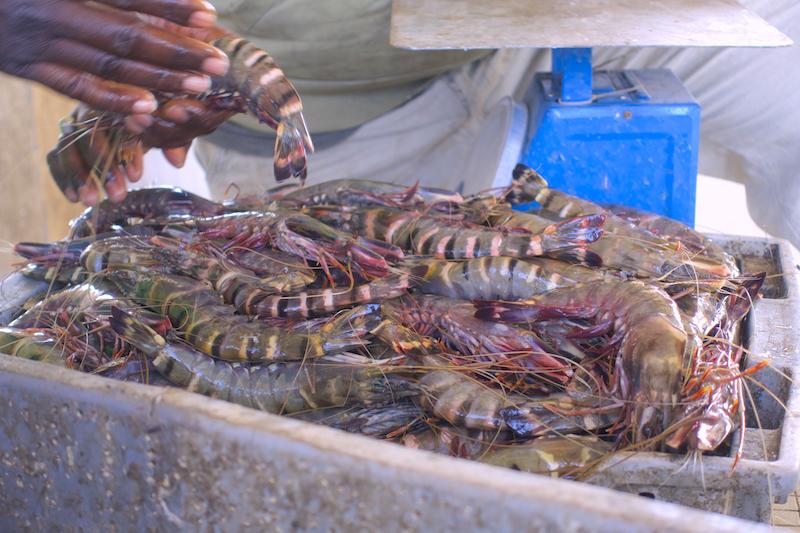 Au port de Ziguinchor vous pouvez trouver des crevettes fraiches. Photo blog voyage tour du monde https://yoytourdumonde.fr